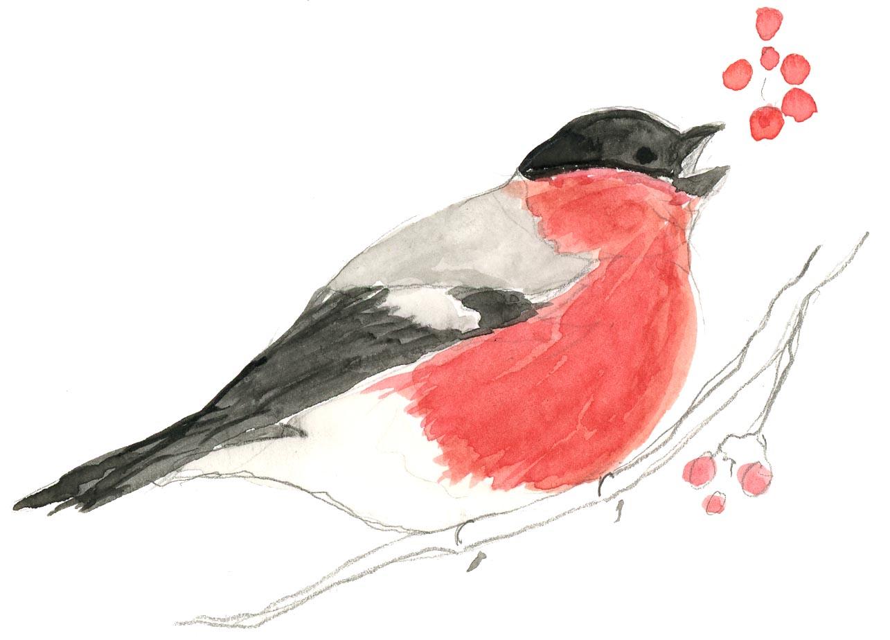 Linnut punatulkkuA